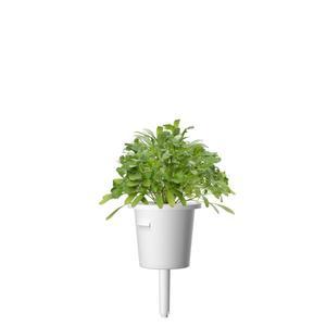 Click&Grow - Capsule di ricarica