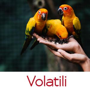 VOLATILI