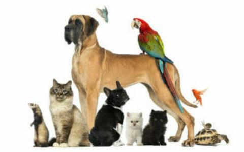 linea animali domestici