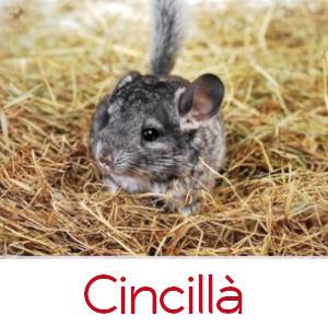 CINCILLA'