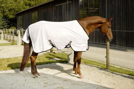 Equitazione e Cavalli