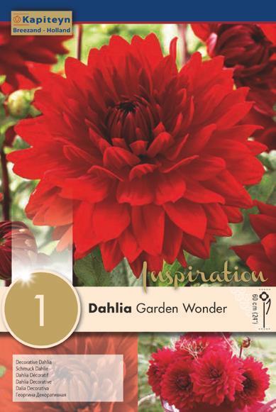 Bulbo di Dahlia Garden Wonder confezione da 1 pz