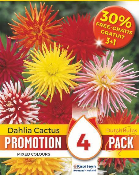 Bulbi di Dahlia Cactus Mix confezione da 3 pz + 1 in Omaggio