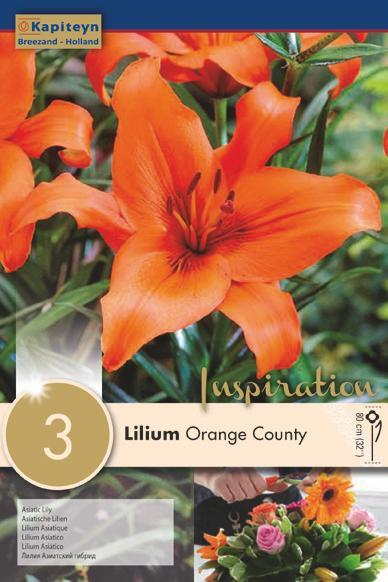 Bulbi di Lilium Orange County confezione da 3 pz