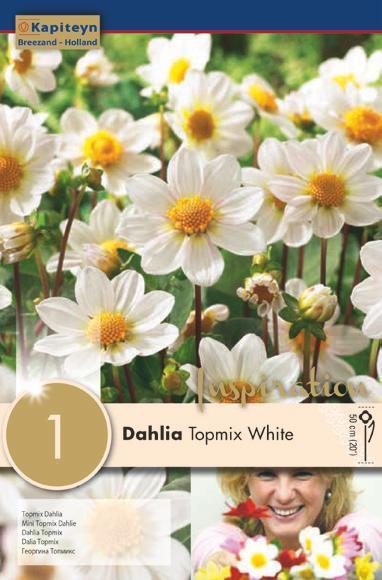 Bulbo di Dahlia Topmix White confezione da 1 pz