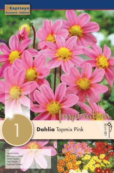Bulbo di Dahlia Topmix Pink confezione da 1 pz