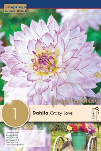Bulbo di Dahlia Crazy Love confezione da 1 pz