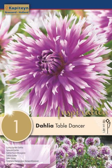 Bulbo di Dahlia Table Dancer confezione da 1 pz