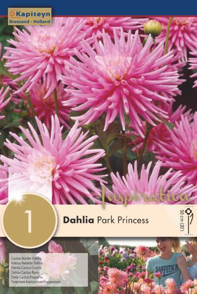 Bulbo di Dahlia Park Princess confezione da 1 pz