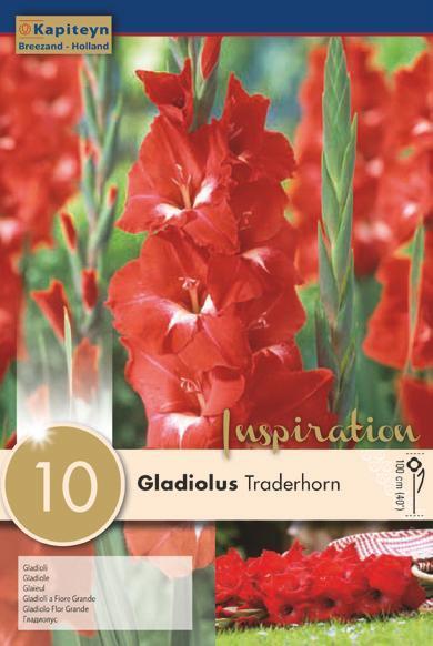 Bulbi di Gladiolo Traderhorn confezione da 10 pz