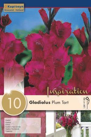 Bulbi di Gladiolo Plum Tart confezione da 10 pz