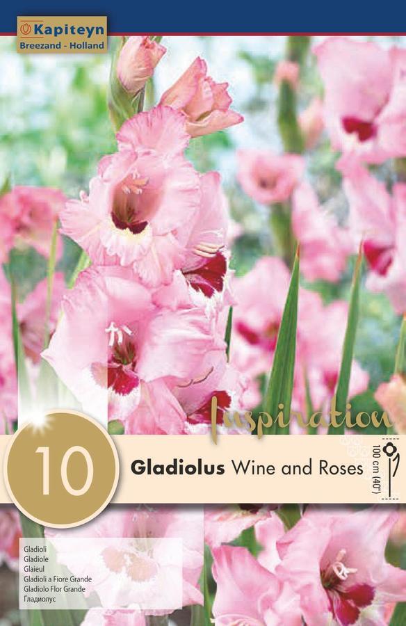 Bulbi di Gladiolo Wine & Roses confezione da 10 pz