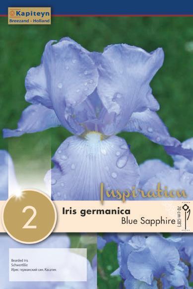 Bulbi di Iris Germanica Blue Sapphire confezione da 2 pz