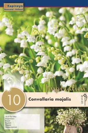 Bulbi di Convallaria Majalis confezione da 10 pz