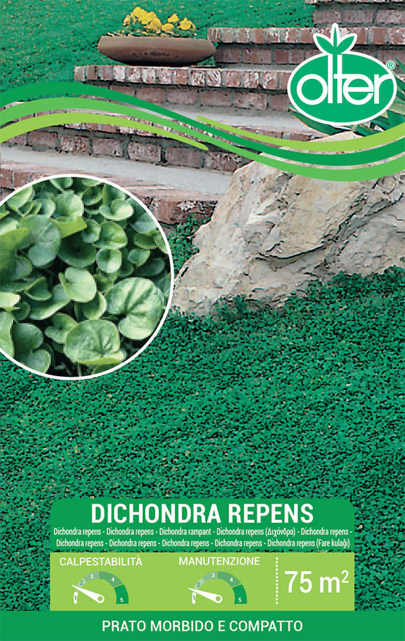 Dichondra Repens Olter Disponibile nei Formati da 100 - 200 GR