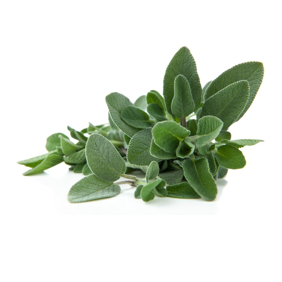 Salvia biologica