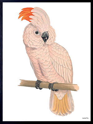 Poster incorniciato: Pink Parrot