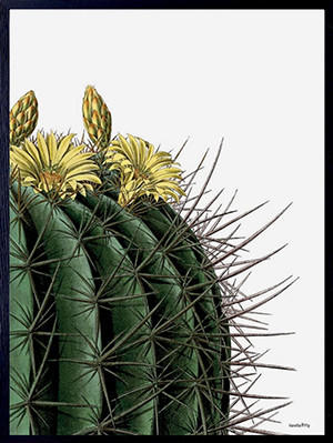 Poster incorniciato: Cactus with yellow flowers