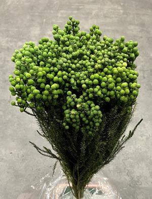 Lanuginosa verde