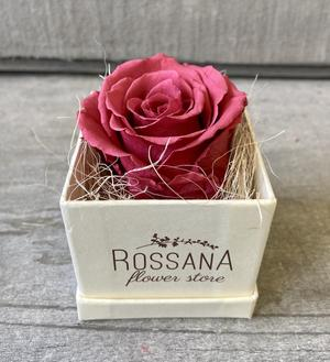 FLOWER BOXettino Rossana Collection CRANBERRY