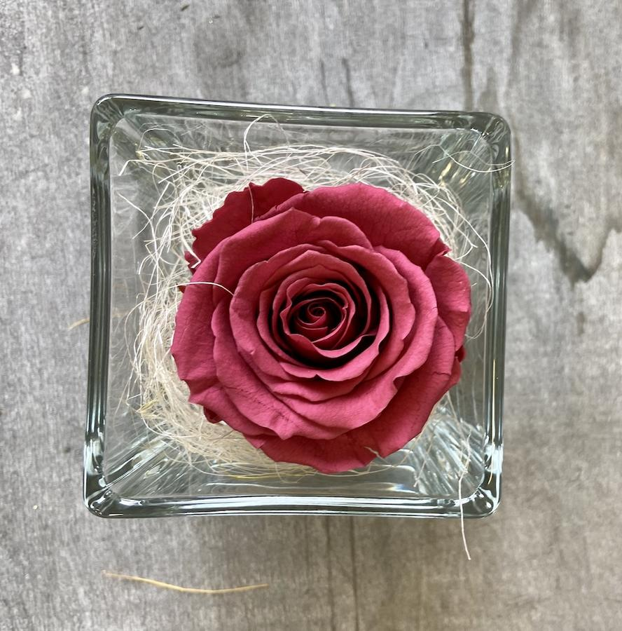 FLOWER CUBEttino Rossana Collection CRANBERRY