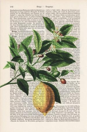 """Art On Words:""""Lemon Tree"""""""