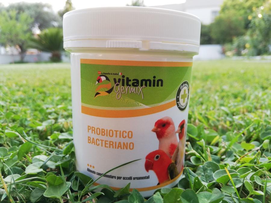 Probiotico bacteriano