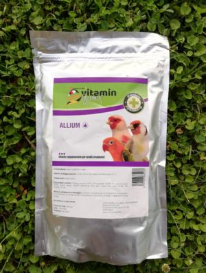 Allium (aglio)