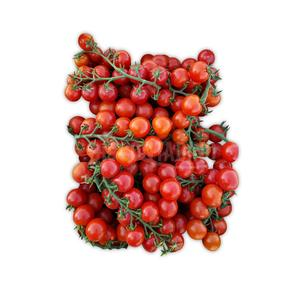 Pomodorini bio