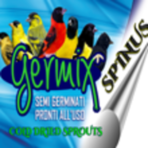 Germix Spinus
