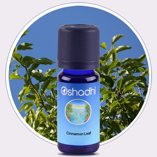 Oshadhi - Cannella foglie olio essenziale