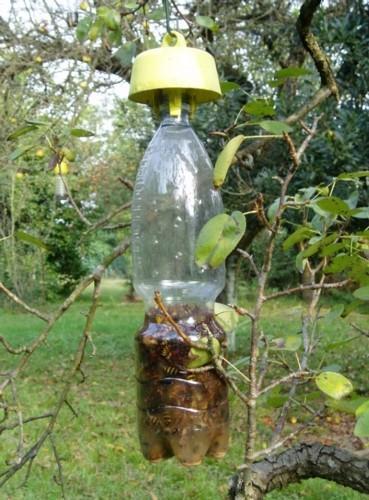 5 Tap Trap® bio tappo trappola  per Vespe Calabroni e Mosche insetti