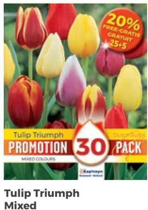 Bulbi di Tulipano Triumph confezione da 30 pz