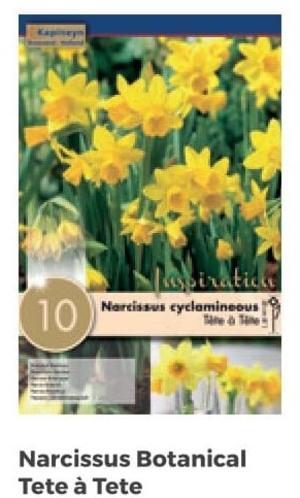 Bulbi di Narciso Tete à Tete confezione da 10 pz
