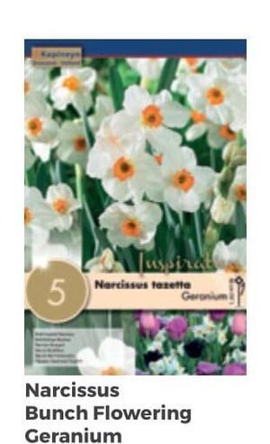 Bulbi di Narciso Bunch confezione da 5 pz