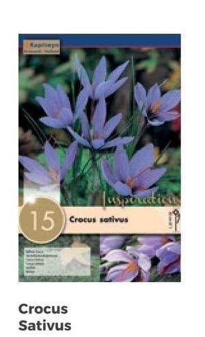 Bulbi di Crocus Sativus confezione da 15 pz