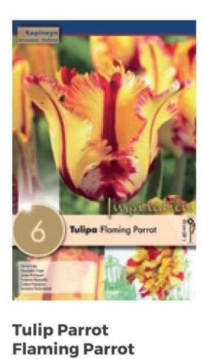 Bulbi di Tulipano Parrot Flaming Parrot confezione da 6 pz
