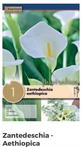 Bulbi di Zantedeschia Aethiopica confezione da 1 pz