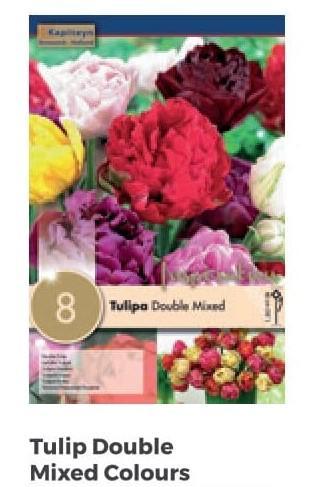 Bulbi di Tulipano Double Mixed Colours confezione da 8 pz