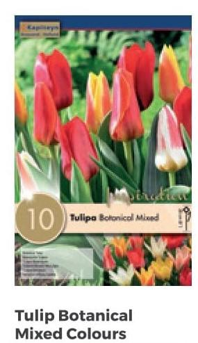 Bulbi di Tulipano Botanical Mixed Colours confezione da 10 pz