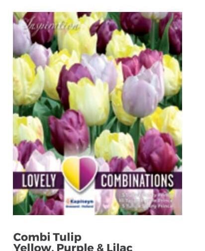 Bulbi di Tulipano Combi Yellow, Purple & Lilac