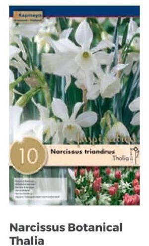 Bulbi di Narciso Thalia confezione da 10 pz
