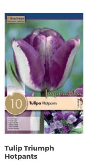 Bulbi di Tulipano Hotpants confezione da 10 pz