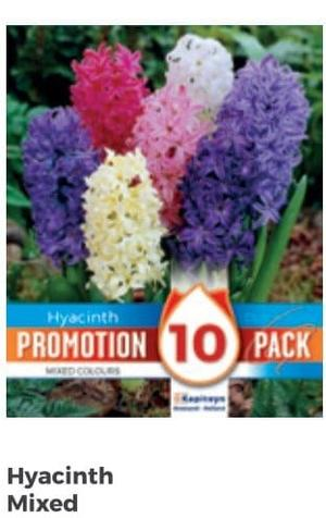 Bulbi di Giacinto Mixed Colours confezione da 10 pz