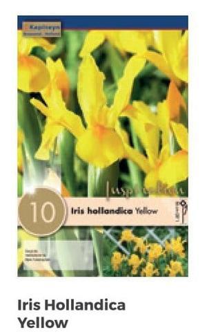 Bulbi di Iris Royal Yellow confezione da  10 pz