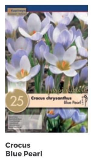 Bulbi di Crocus Blue Pearl confezione da 25 pz