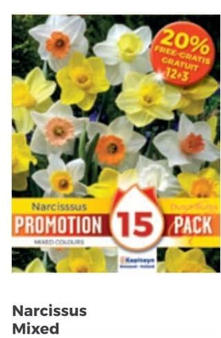 Bulbi di Narciso Mixed confezione da 15 pz