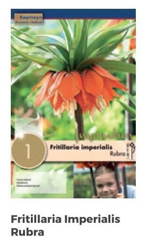 Bulbi di Fritillaria Imperialis Rubra confezione da 1 pz
