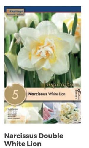 Bulbi di Narciso White Lion confezione da 5 pz