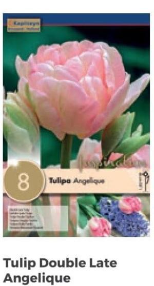 Bulbi di Tulipano Double Angelique confezione da 8 pz